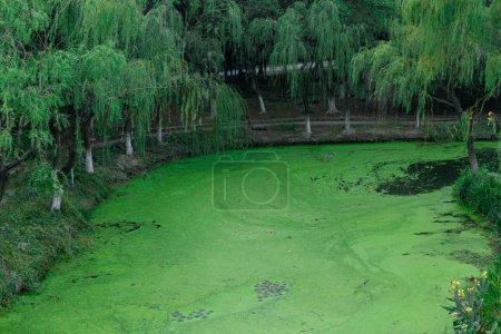 Photo pour La rivière verte en forêt le jour - image libre de droit
