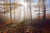 Mysterious morning fog in a autumn forest