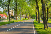Beautiful bicycle road surrounded by trees