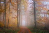 Mysterious morning fog in autumn forest