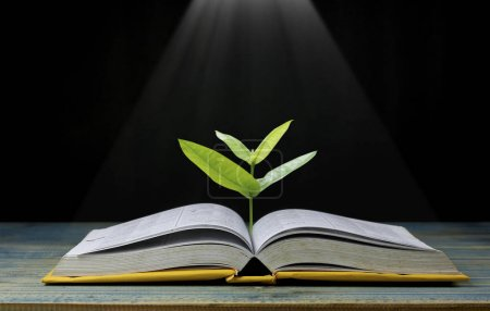 Tree grow up from book with light shining as getin...