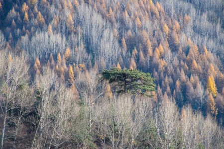 Photo pour Vue panoramique sur les montagnes avec des arbres le jour, concept de voyage - image libre de droit