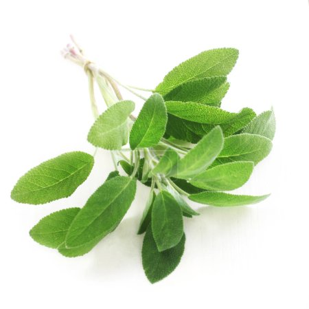 Photo for Close-up shot of Bunch of Sage Isolated On White - Royalty Free Image