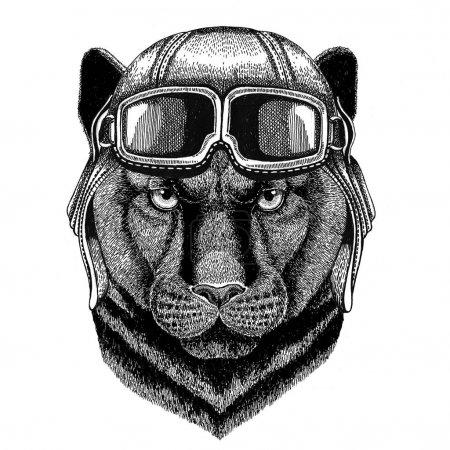 Пантера Пума Пума дикая кошка