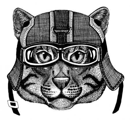Wild cat Animal wearing motorycle helmet. Image for kindergarten children clothing, kids. T-shirt, tattoo, emblem, badge, logo, patch