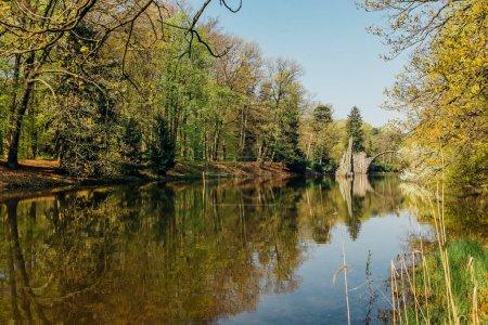 Photo pour Belle forêt avec lac, nature - image libre de droit