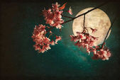 cherry blossom with full moon