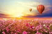 Cosmos flowers field and hot air balloons