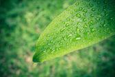 Green Leaf Background. Leaves Background for Design Vintage Style