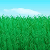 Vector illustration The natural background Thickets of green grass on the lawn in the sky the cloud Design for brochure business cards banner