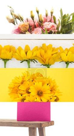 Photo pour Collage de fleurs jaunes et roses et banc en bois sur blanc - image libre de droit