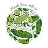Beautiful handdrawn pattern in bright green colours Vector illustration with cucumbers and cucumber slices in unique artistic style on a white background Natural and organic food creative concept