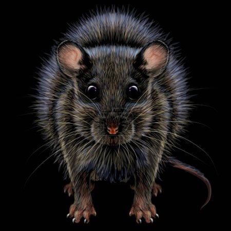 Illustration for Mouse. Realistic, artistic, graphic, color portrait of a mouse on a black background. - Royalty Free Image