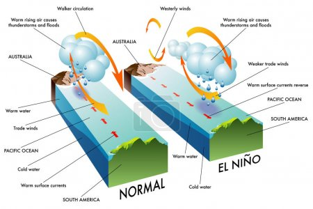 Illustration for El Nino Southern Oscillation (ENSO) is a global phenomenon in ocean and atmosphere. For an unknown reason El Nino events occur irregularly at intervals once every 2-7 years. The effects of El Nio mess up normal winter conditions throughout the Pacif - Royalty Free Image