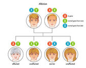 illustration of the albinism diagram