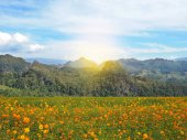 orange flowers blooming in the field and mountains