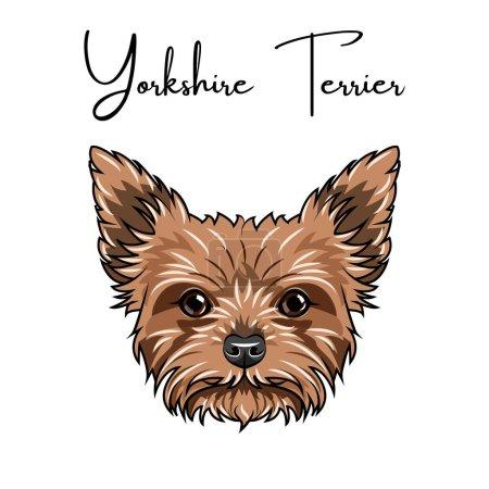 Illustration pour Yorkshire terrier portrait. Charmant animal. Race de chien. Illustration vectorielle - image libre de droit