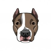 American staffordshire terrier portrait Dog breed Dog muzzle head face Vector