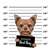 Yorkshire Terrier dog Bad boy Dog prison Police mugshot background Yorkshire terrier criminal Arrested dog Vector
