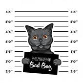 Gray cat bad boy Cat criminal Arrest photo Police records Cat prison Police mugshot background Vector