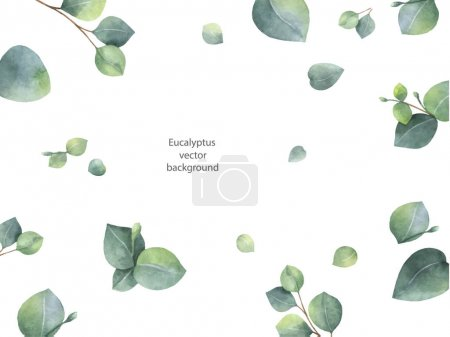 Illustration for Watercolor vector green floral banner with silver dollar eucalyptus leaves and branches isolated on white background. Healing Herbs for cards, wedding invitation, posters, save the date or greeting - Royalty Free Image