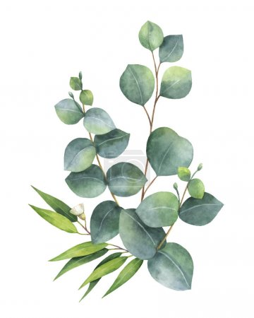 Illustration for Watercolor vector bouquet with green eucalyptus leaves and branches. Spring or summer flowers for invitation, wedding or greeting cards. - Royalty Free Image