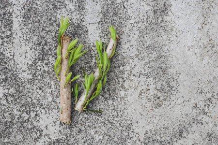 Photo pour Sensibilisation à l'environnement et besoin de respect de la métaphore de la nature, petit morceau de branche aux feuilles vertes coupé en morceaux posé sur du béton - image libre de droit