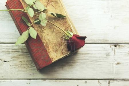 book and a red rose