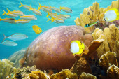 Underwater coral reef with fish school