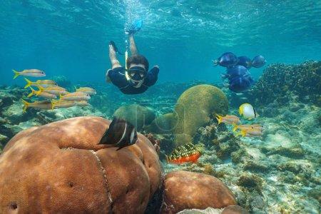 Photo pour Homme plongée sous-marine dans un récif corallien avec des poissons tropicaux colorés, mer des Caraïbes - image libre de droit