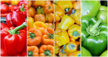 Foto de Collage de frescos y orgánicos rojos, verdes, naranja y amarillo pimientos en el mercado - Imagen libre de derechos