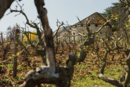 Photo for Domaine de l'Arlot winery, Burgundy, France - Royalty Free Image