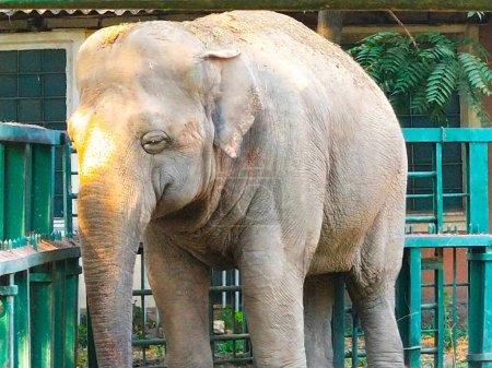 Closeup big Elephant in National Park...