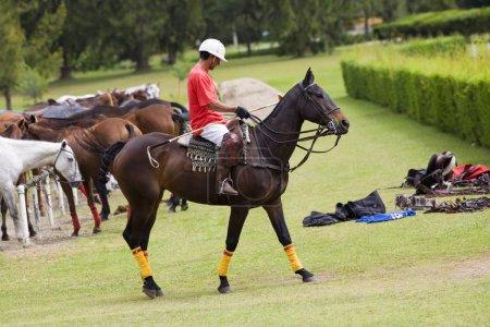 Photo pour Profil latéral d'un homme jouant au polo - image libre de droit