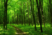 a path is in the green forest
