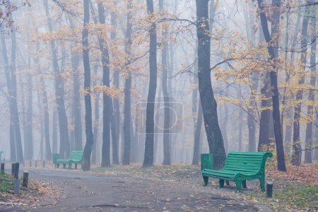 trees growing in the park in autumn season in a dense fog. Foliage of a maple fallen to the ground