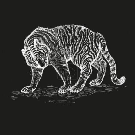 tiger black and white vector illustration.