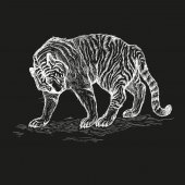 tiger black and white vector illustration