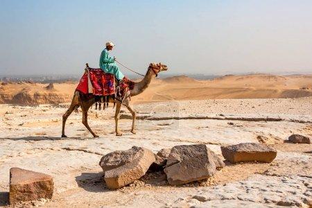 GIZA, EGYPT- FEBRUARY 2010: Bedouin riding a camel...
