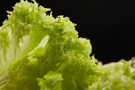 Fresh lettuce closeup