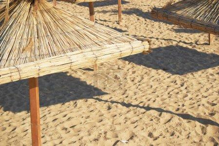 umbrellas on the black sea beach