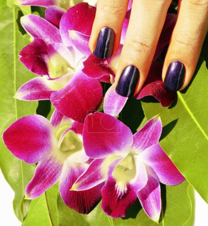 Fingernails with manicure and orchids