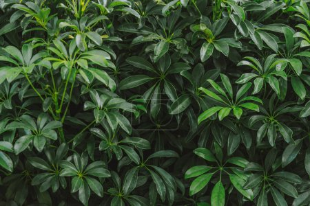 Photo for Natural background of green leaves - Royalty Free Image