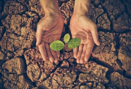 Photo pour Mains tenant un arbre sur terre fissurée / Aimer et protéger la nature contre la destruction de l'environnement concept - image libre de droit