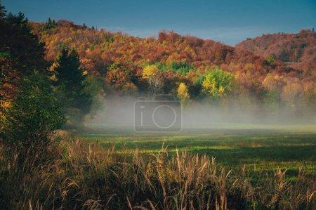 Photo pour Peaceful autumn morning scenery by Carpathian forest - image libre de droit