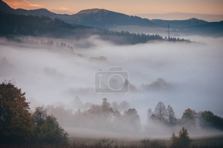Misty autumn landscape. fog between trees, beautiful morning scenery
