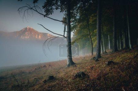 Photo pour Roches de Sulov dans la brume d'automne, magnifique paysage naturel, Slovaquie - image libre de droit