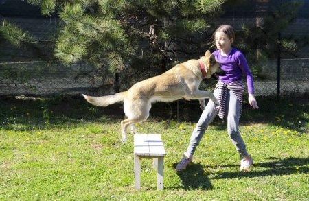 Photo pour Jeune femme avec un chien dans le parc - image libre de droit