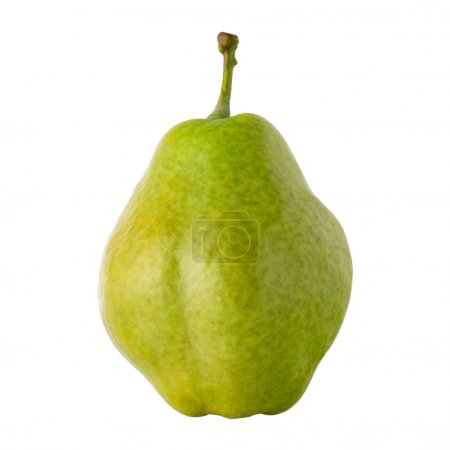 Photo for Large organic pear on a white isolated background close-up - Royalty Free Image