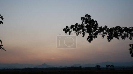 Photo pour Branche d'arbre avec fond de coucher de soleil - image libre de droit
